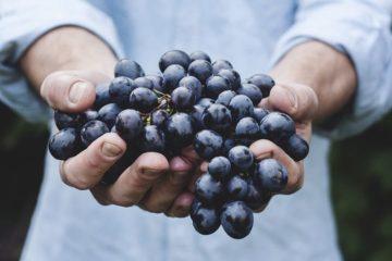 hojné ovoce